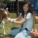 girl-feeding-goat-590px