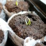 organic-seedling